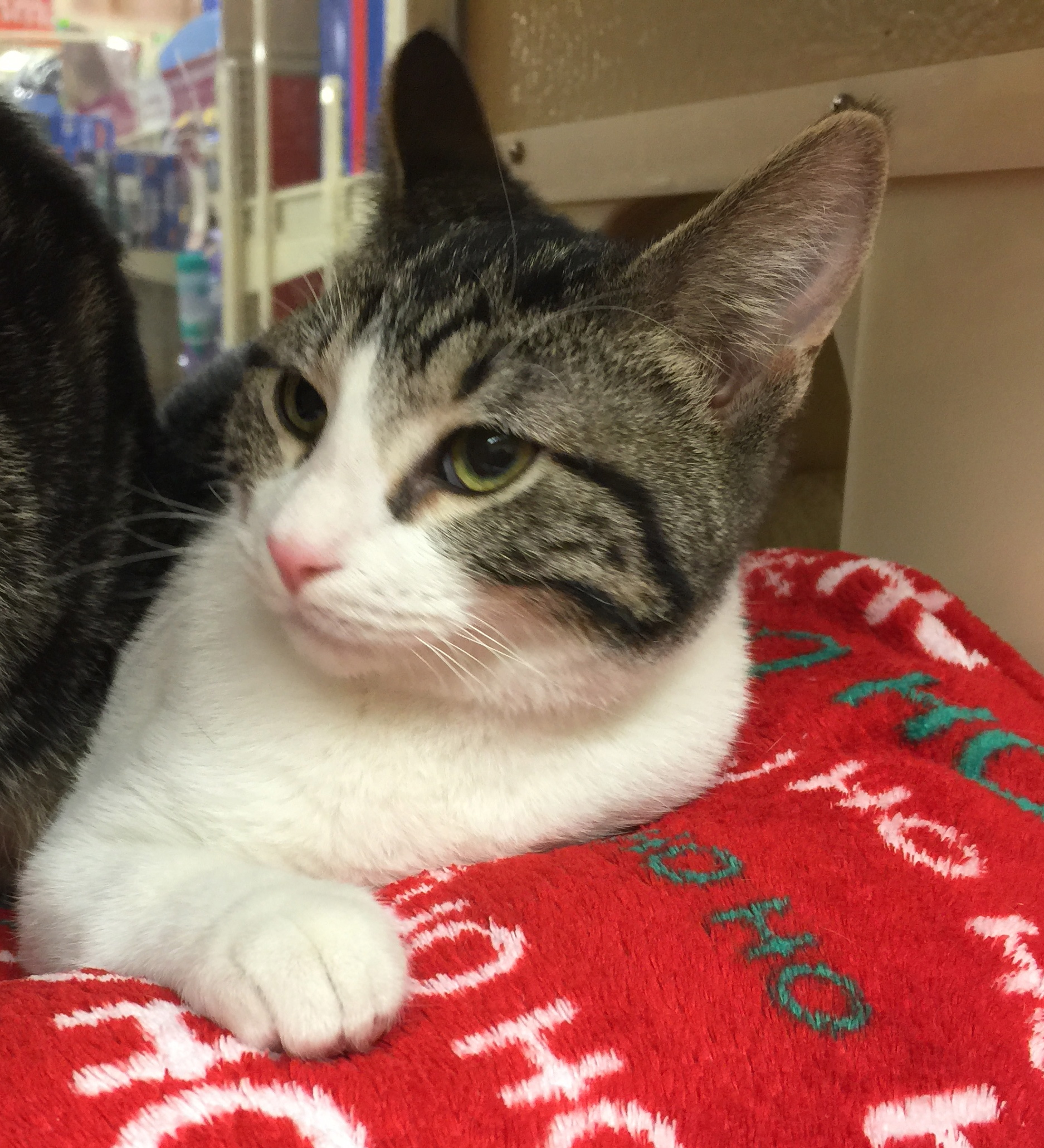 Lone Pine Shelter - Our Available Pets